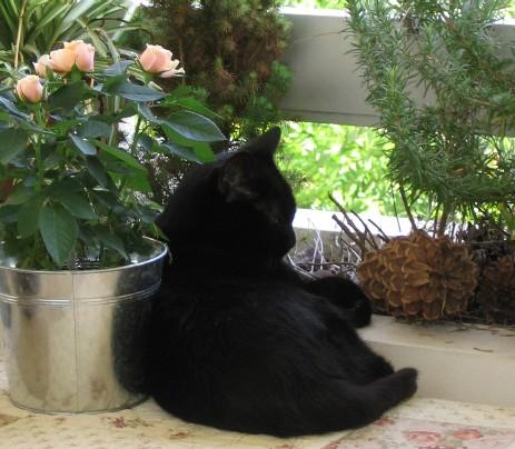 Grandes galeries de chatte noire